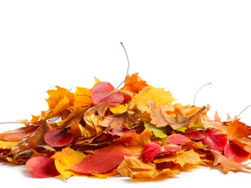 yellow red and brown leaves in a pile on a white background